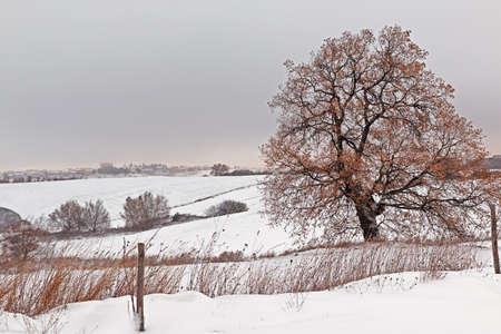 locality: Snowy landscape of an Italian locality