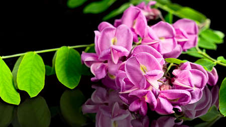 evocative: Pink flowers reflected on black plane