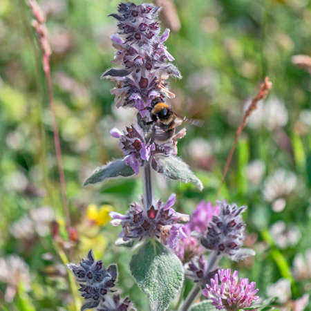bee on flower: bee pollinating flower