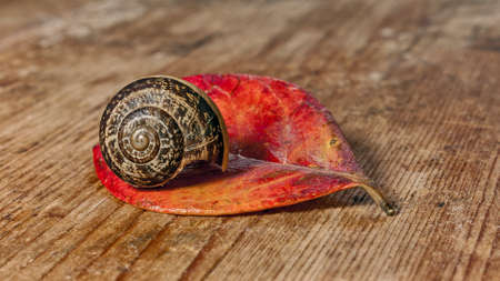 evocative: snail on a red leaf and wood base
