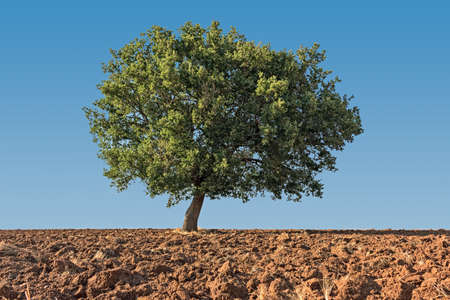 solitaire: solitaire tree on ground in blue sky Stock Photo