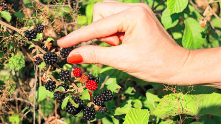 atrapar: mano blackberry captura de la mujer Foto de archivo