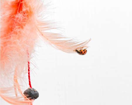 coccinella: small ladybug attacked orange feather