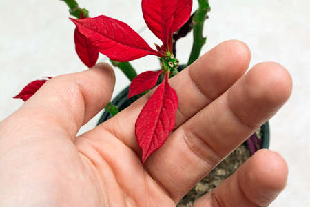natural love: small red flower in fingers Stock Photo
