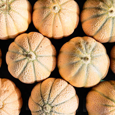 melons: netted melons