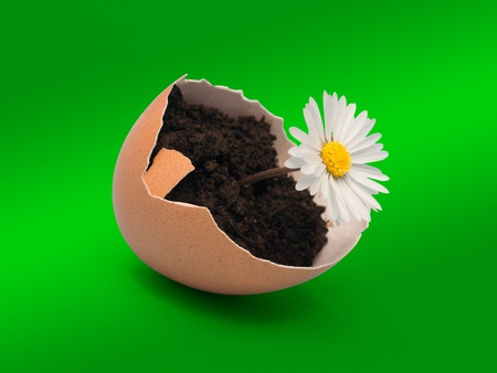 ambiente:  daisy in eggshell on green background