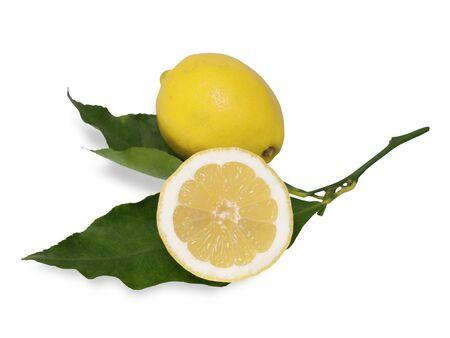 foglie: limone intero e una metà con foglie su sfondo bianco Whole lemon and a half with leaves on white background