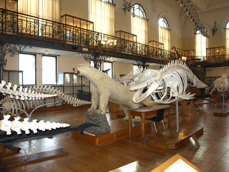oceanographic:  internal oceanographic museum of monaco principality france