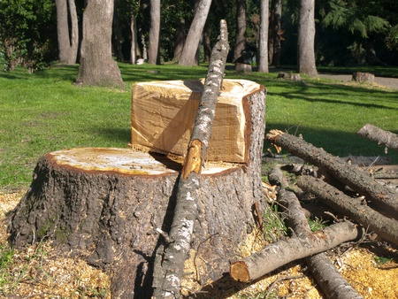 accepts: cut tree in the woods