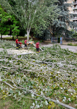 accepts: NAPLES, ITALY- JULY 10: After collapse of large trees, due to the bad weather and the lack of maintenance, firefighters ensures the elimination trunk that blocks the passage on the roads.  on  july 10, 2014 in Naples Editorial