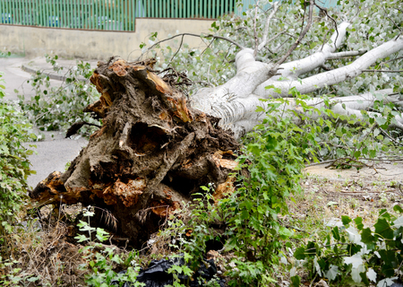 accepts: tree collapsed due to the bad weather Stock Photo
