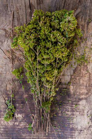 aromatický: čerstvý aromatická oregano na starý dřevěný stůl
