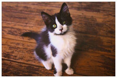 kitty cat: Kitty cat