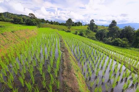 rice terrace: Rice terrace at Mae Chaem, Chiangmai, Thailand