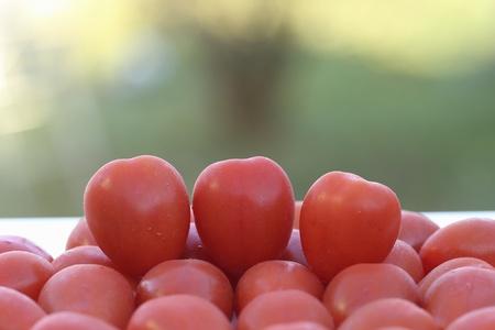 closeup: Closeup of small red tomatoes