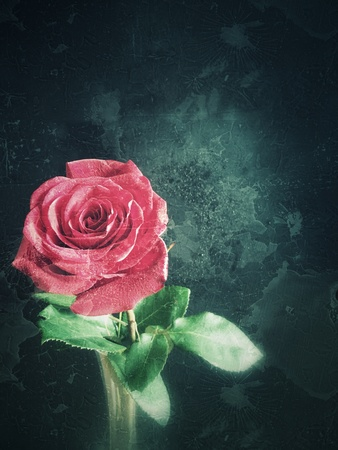 grunge: Old vintage grunge texture with red rose Stock Photo