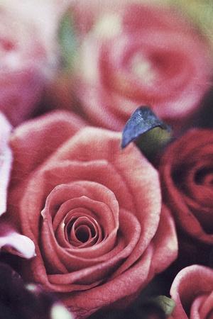grunge: Old vintage grunge texture with pink roses