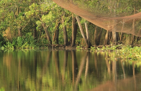 net: Peaceful scenery of green trees and fishing net with its reflection along the riverside for nature background
