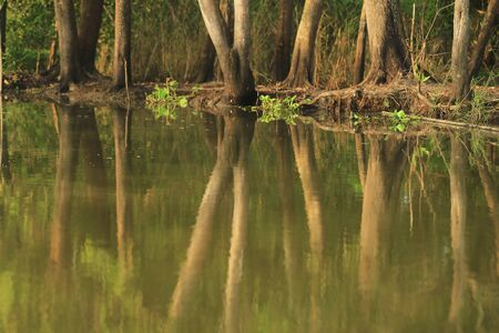 riverside trees: Peaceful scenery and green trees with its reflection along the riverside for nature background