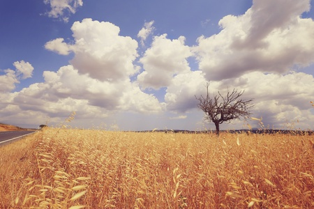 style: Bare dead tree middle of dry grass field in summer, vintage landscape style