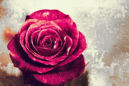 Oude Vintage Grunge-achtergrond met rode roos