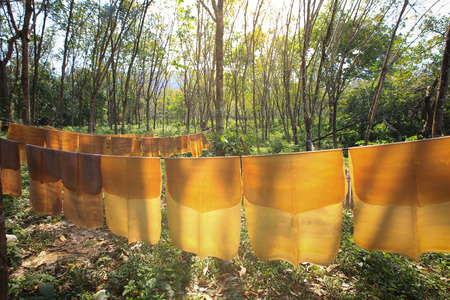 Drying of para rubber natural rubber sheet Stock Photo