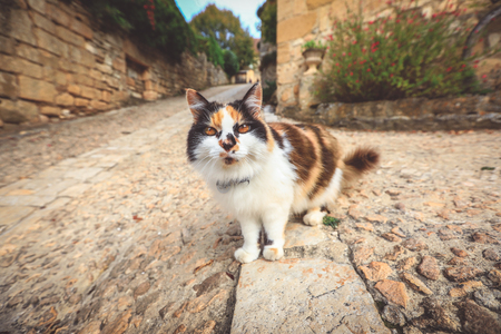 The cat walks along the street of the old city. cat staring at camera.