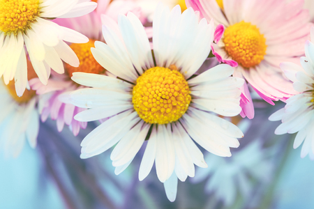Selective focus of daisy flowers in vintage style for nature background Imagens