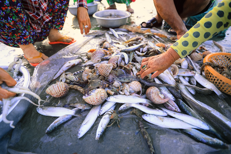Local vendors are collecting fishes and shelles at famous fishing village in Mui ne, Vietnam Imagens