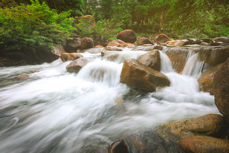 River stream waterfall and tropical forest green trees Imagens
