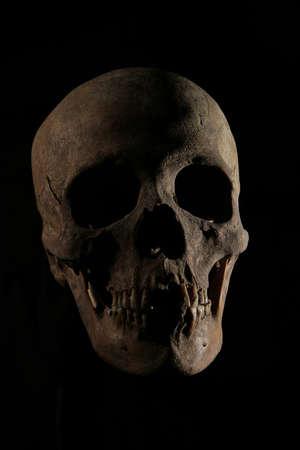 skull on black Banco de Imagens