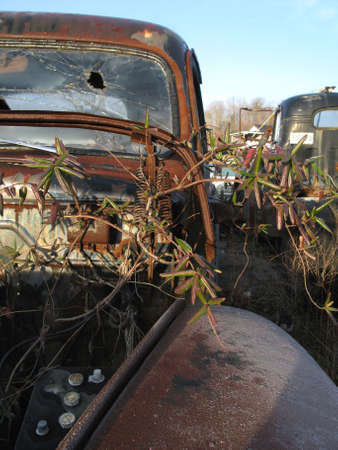 An old truck rusting in the sun and overgrown with weeds