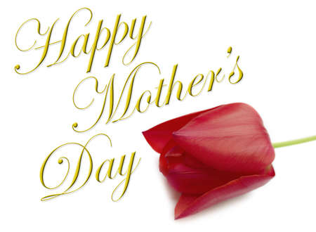 Gold Happy Mothers Day type with red tulip on white background.