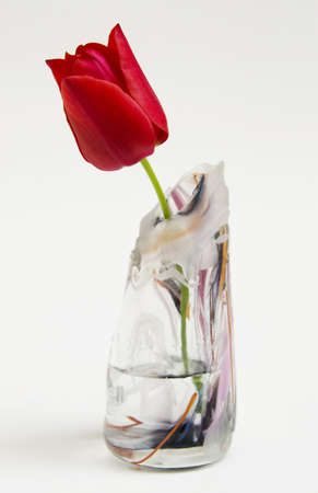 blown: A solitary red tulip in a hand blown glass vase. Stock Photo