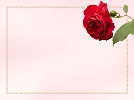 Card with rose and border for an invitation or notecard.