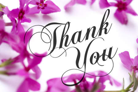 note card: Thank You card with pink phlox background and elegant script text.
