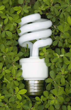 resourceful: An energy saving lightbulb surrounded by green vegetation.