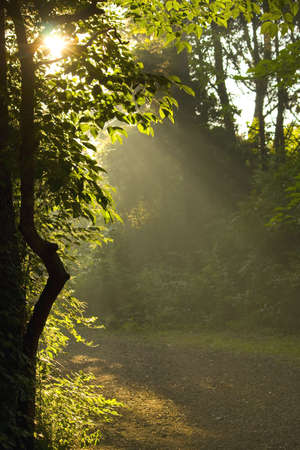 Morning sun rays beam through silhouetted leaves and branches. Stock Photo - 3211475