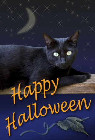 A black cat wishes you a Happy Halloween. photo