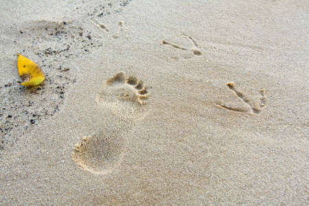 a childs and a birds footprint in the sand.