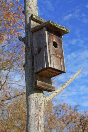 Old bluebird nesting box against an autumn blue sky.