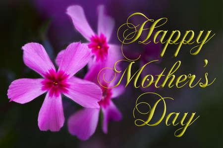 Happy moeder van dag type met roze phlox. Stockfoto
