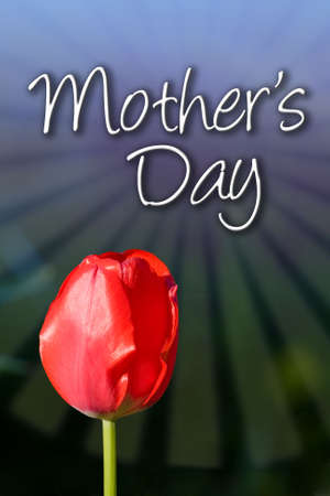 notecard: Mothers Day type with red tulip and graphic background.