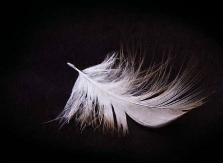 black: Bird feather isolated on a black background. Stock Photo