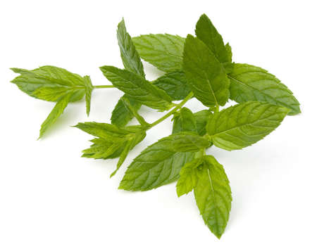 spearmint: Fresh Spearmint leaves (Mentha spicata) isolated on a white background
