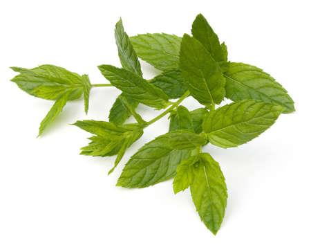 mentha: Hojas de Spearmint frescas (Mentha spicata) aisladas en un fondo blanco  Foto de archivo