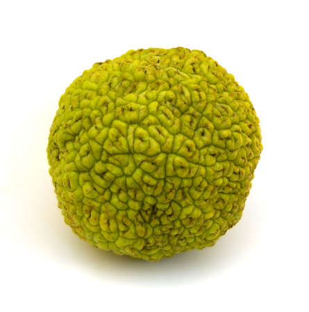 Osage Orange fruit (Maclura pomifera) isolated on white background. Stock Photo - 7981387