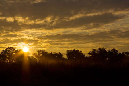 Golden morning sunrise with trees silhouetted against sky. Stock Photo - 8067350