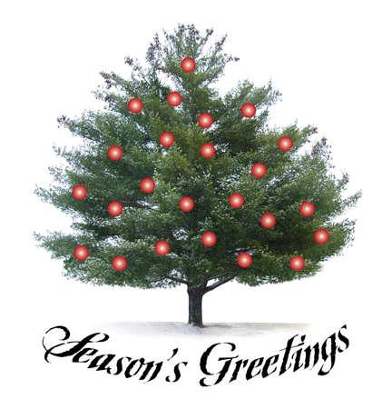 greeting season: Seasons Greetings script type with pine tree and red christmas bulbs