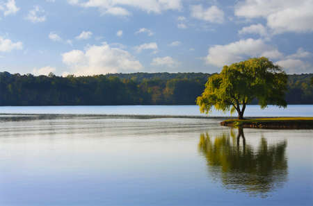 Willow tree on the Tennessee River at The Cove at Concord Park, Knoxville Standard-Bild
